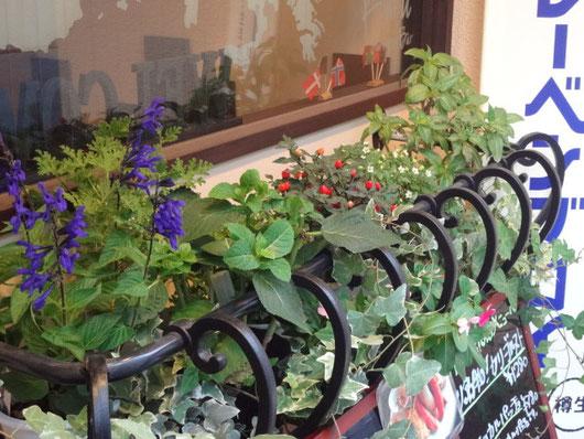 店の前の花壇にはハーブなどがいっぱいです!