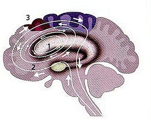 Hilfe bei Zwangsstörungen: In der Neurobiologie sind Zwänge ein  ewiger Kreislauf zwishcen Unterbewußtsein und Bewußtsein. Dsa gilt für Zwangshandlungen wie Zwangsgedanken gleichermaßen
