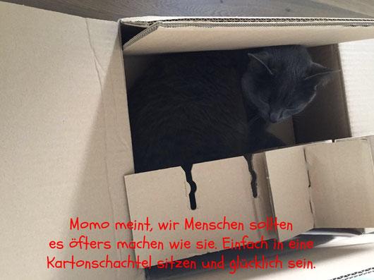 Katze in Kartonschachtel