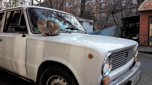 Katze auf der Motorhaube eines Autos