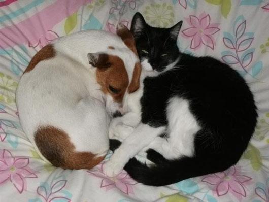 große Liebe zwischen Hund und Katz