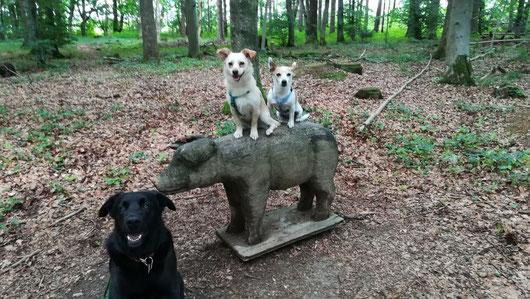 Schwein gehabt mit der Hundebetreuung bei HundKatzHaus