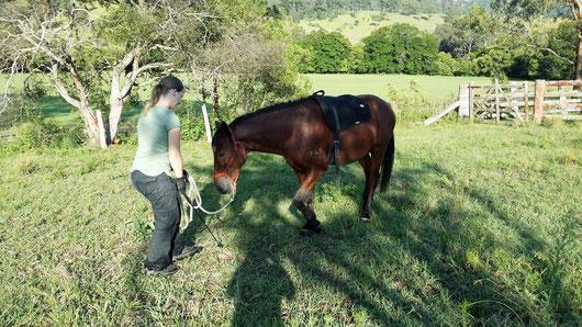 Individuelles Pferdetraining und Natural Horsemanship für jede Situation angepasst