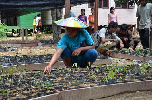 Indonesian community member working in project tree nursery