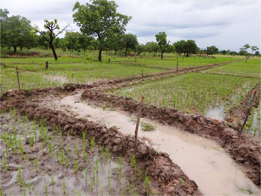 Improved water management during the rainy season