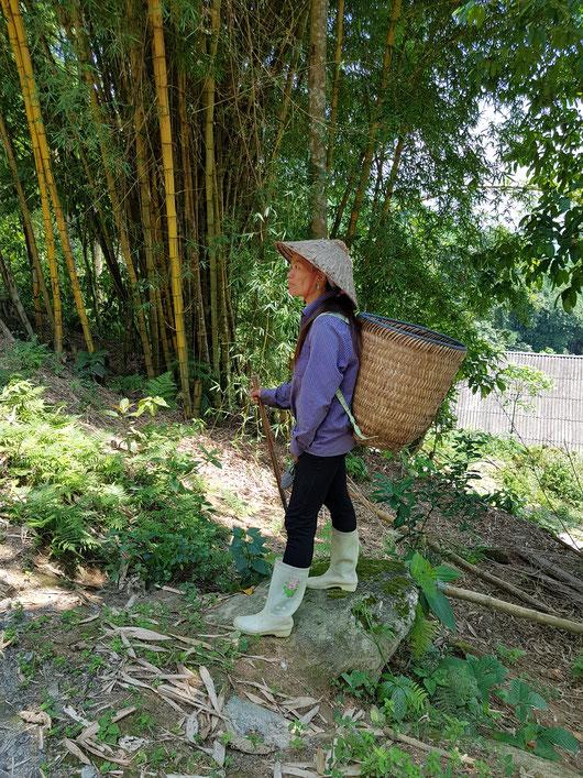 Medicinal bath herb farmer in Hoang Lien AHP in Vietnam