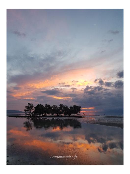 • La mangrove • Siquijor Island Philippines