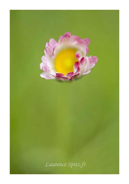 • A fleur de pétales •