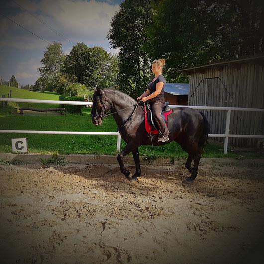Klassische Dressur, Dressurteaining,  Pferdetraining, Dorfer Hannah, Beritt,  Jungpferdausbildung, Pferdeausbildung,  Freiheitsdressur