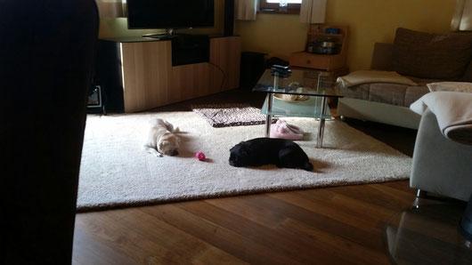 Müde Hunde sind glückliche Hunde :)