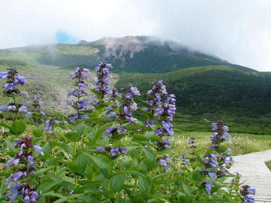 弥陀ヶ原から山頂を望む。                                  一寸の晴れ間、軽く食事をしていると奇遇も奇遇下山してきた友人に会う。