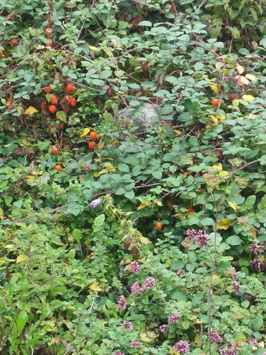Wilde Lampion-Blumen, auch Arnika, Christrosen, und Manche Unbekannten