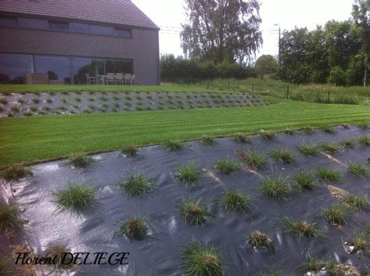 création pelouse rouleaux et plantation talus graminées