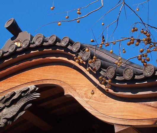 1月3日(2015) ムクロジ(無患子)の実と深大寺の甍(いらか):実の中の黒い種子が羽根つきの羽の根元に使われている