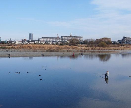 1月4日(2015) 多摩川釣景色:ニケ領上河原堰堤の近く(調布市の対岸、川崎市多摩区からの眺め)