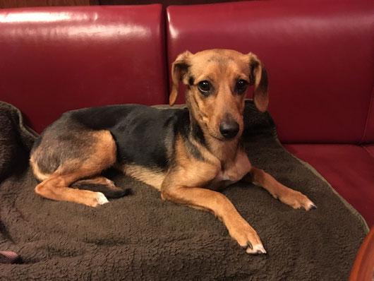 So ein braver Hund darf auch im Café mal mit auf die Bank!