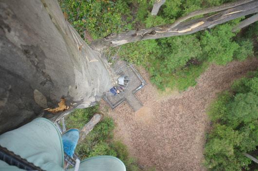 Firetree, klettern bis zu 65 Meter. Damit man eine Vorstellung hat, wie hoch ich gerad bin: In der Mitte liegt ganz unten eine Frau.