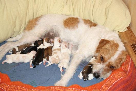 Nuby und ihre Kinder