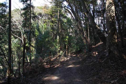 いくつかある登山道の入口はすべて閉鎖されていたが、立入禁止ではない道に入ってみた