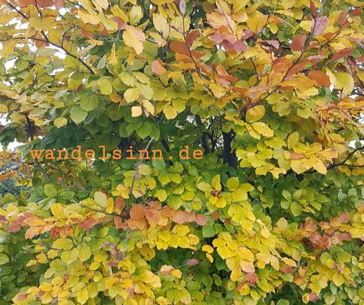 Herbstvielfalt