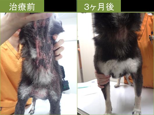 犬 アトピー 性 皮膚 炎