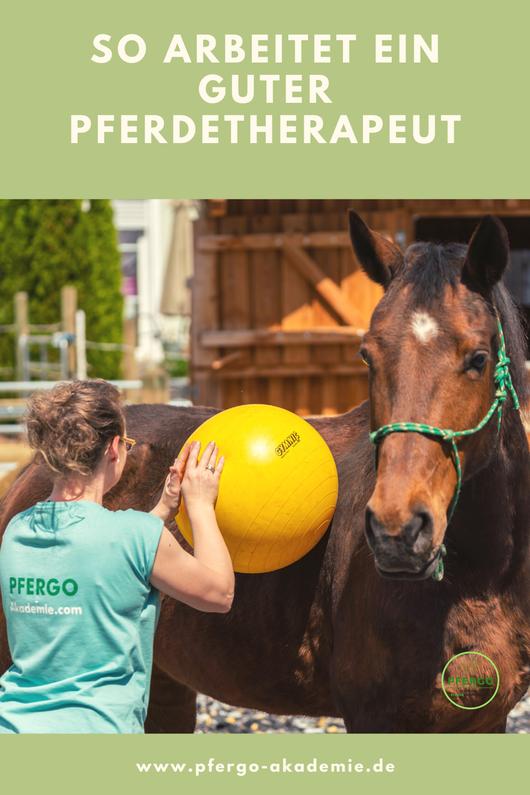 Ein professioneller Pferdetherapeut braucht nicht nur gutes Fachwissen rund um das Pferd.