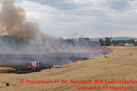 Feuerwehr, Blaulicht, FF Wr. Neustadt, Flurbrand, Ebenfurth, Feld, Weizen
