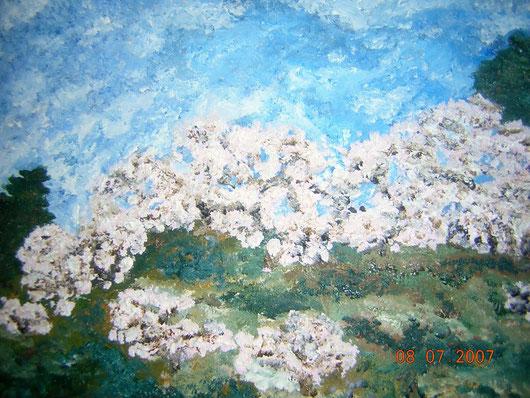 LA COLLINA DEI CILIEGI -2007 olio su tela 35 x 45