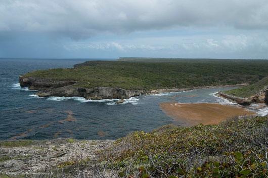 Nappe d'algues Sargasses à l'embouchure du bras de mer à la Porte d'Enfer en Guadeloupe
