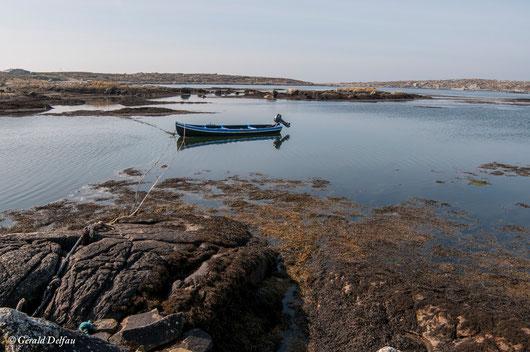 Algues Sargasses au bout de la baie de Galway en Irlande