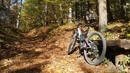 Mountainbike im Wald lehnt an Holzbank