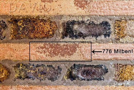 Insektenhotel Nisthilfe Insektennisthilfe Verschlußdeckel