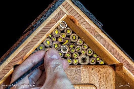 Insektenhotel Insektennisthilfe Nisthilfe Bambus Pappröhrchen markieren der Verschlussdeckel wildbee insect hotel nesting aid