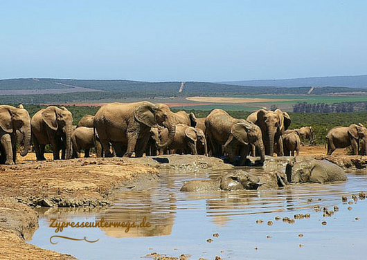 Am Hapoor Wasserloch im Addo Elephant National Park