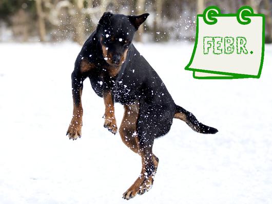 Hund im Schnee - Pfotenpflege im Winter