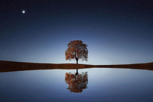 Der Weg der Erleuchtung - Eine Geschichte aus dem Zen-Buddhismus