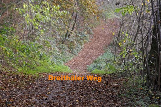 Dreithäler Weg Natursteig Sieg Deutschland