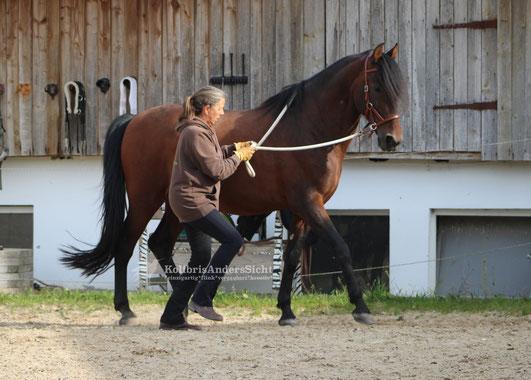 Round Pen, Horsemanship, Im Sinne des Pferdes
