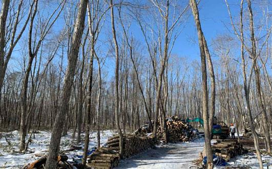 適切な森林管理