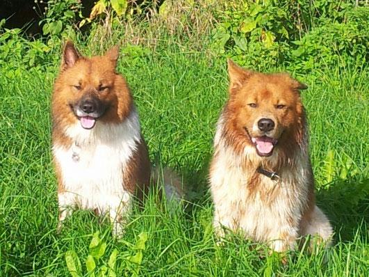 Antin-Ari mit Bruder Adibo gehen gerne zusammen spazieren.