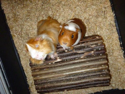 Timmy & Bonny