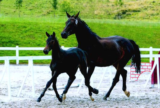 SR Zucht- und Sportstall Scheidegger Rohrbachgraben, Pferd mit Fohlen