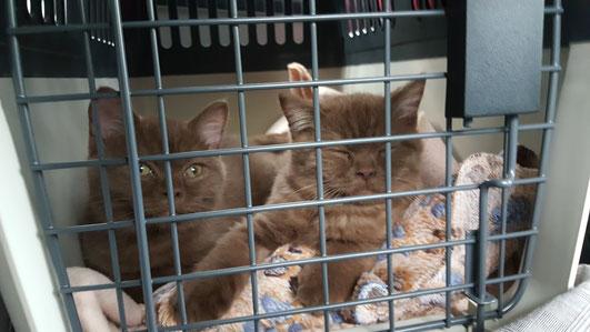 zwei Kätzchen auf großer Fahrt