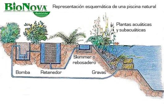 Sistema de depuraci n natural bionova piscinas naturales for Como construir una laguna artificial