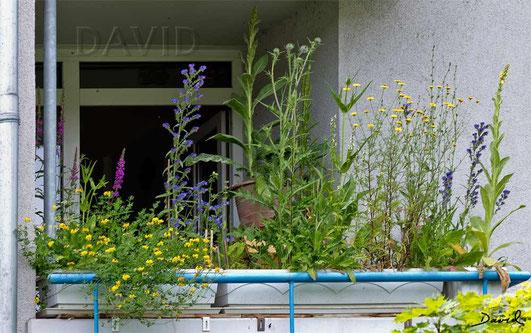 Naturgarten Balkon Naturgartenbalkon