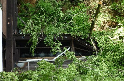 Sturmschaden 13.06.2013