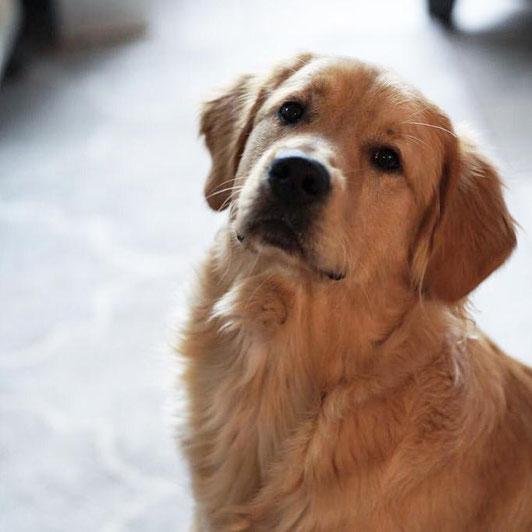 Dog Buddy mit ca einem Jahr.