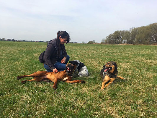 Gassiservice Hundegruppe Rudel Dogwalker