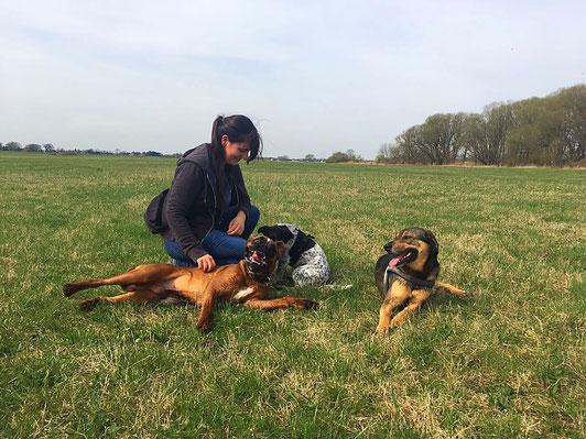 Gassiservice Hundebetreuung Hundetagesstätte Rudel Dogwalker