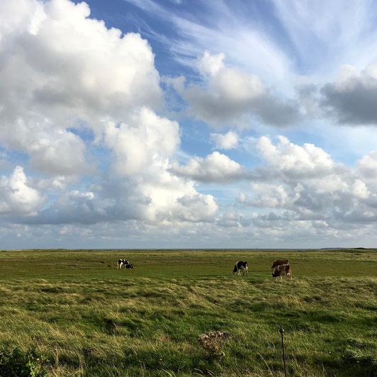 Wiesen, Kühe, Föhr